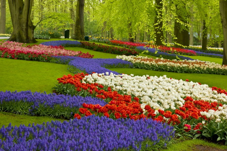 Escursión compartida a los Jardines Keukenhof  y a los campos de tulipanes