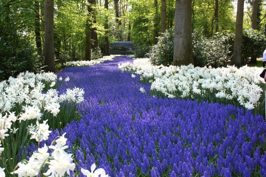 Excursión por lo mejor de Ámsterdam y visita a los Jardines Keukenhof